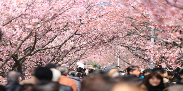 Taisho Pharmaceutical Reaches Out to Japan's Pollen Allergy Sufferers